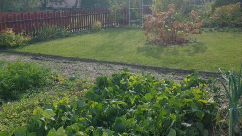 ogródek działkowy z trawą, drzewami i uprawami